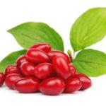Полезные свойства и калорийность кизила