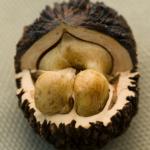 Полезные свойства черного ореха