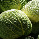 Польза и вред савойской капусты