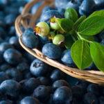 Полезные свойства и калорийность черники