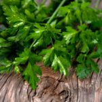 Полезные и лечебные свойства петрушки